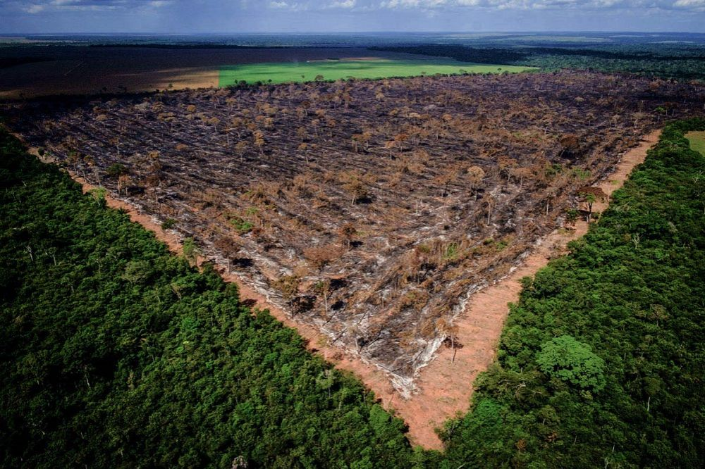 Fake news, lies and videotape: The tale of rampant destruction in the Brazilian Amazon Forest