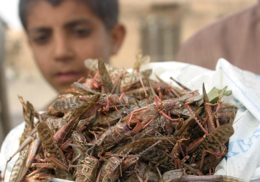 Locust mayhem threatening food security in East Africa