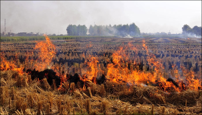 Stubble Burning and Air Pollution: Punjab Experts Speak