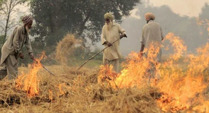 Crop burning already: ''Early varieties' of crops being harvested
