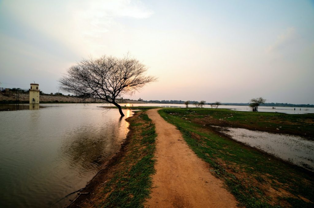 Continued neglect an existential threat for India's grasslands
