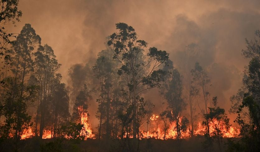 Australian state declares emergency amidst record heat wave, raging wildfires