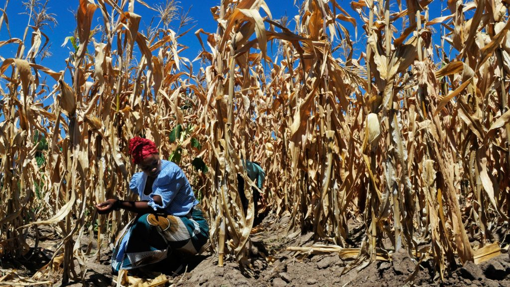 Increased heat-drought combinations induced by climate change could damage crops: Study