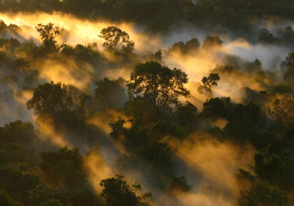 Forest carbon projects: In vogue, but are they effective?