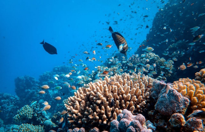Coral reef scientists raise alarm as climate change decimates ocean ecosystems vital to fish andhumans