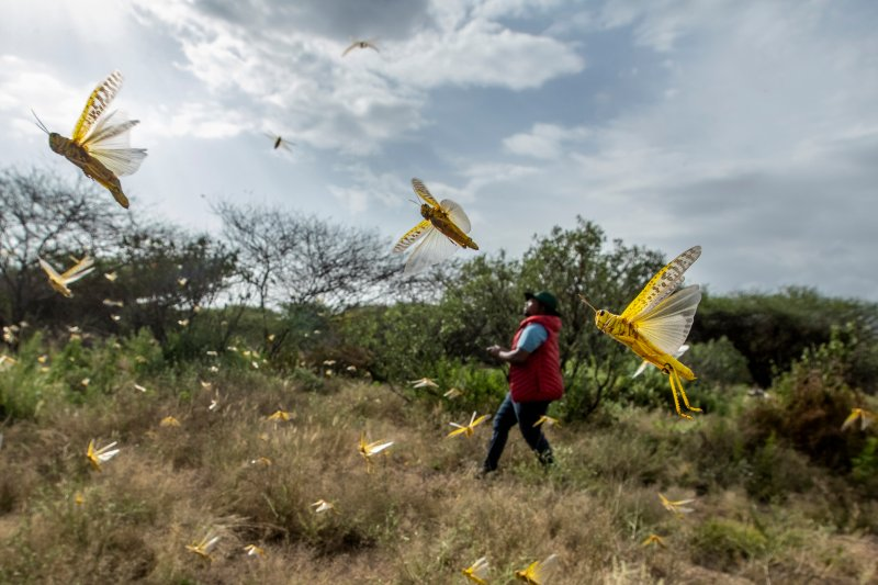 Locust outbreak threatening food security in East Africa; Somalia declares national emergency