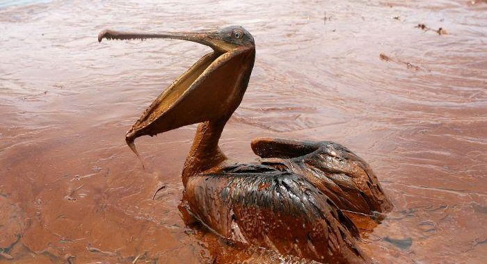 BARC develops biodegradable superabsorbent to soak up oil spills