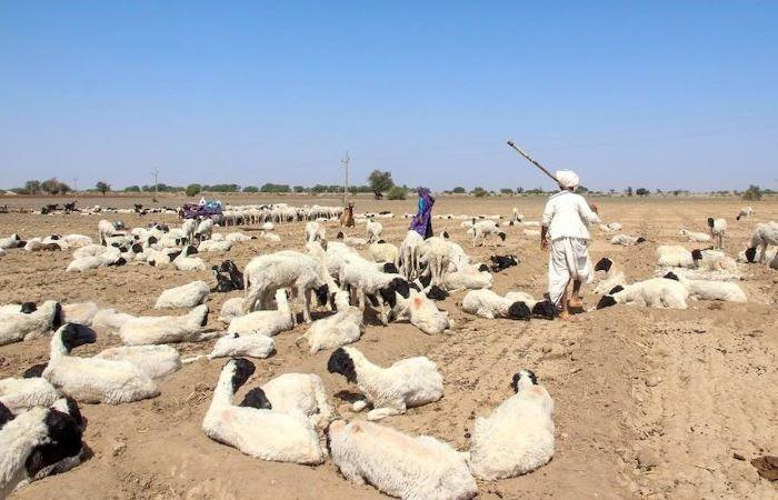 All encroachments in Banni grasslands to be removed in six months: India's green court
