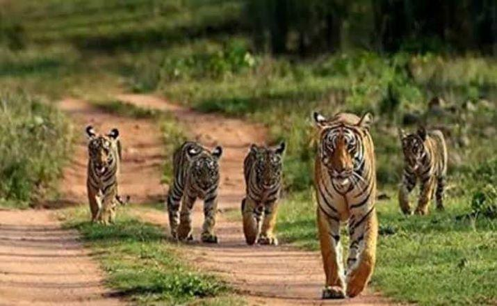 National wildlife board approves guidelines for ecotourism projects in forest areas