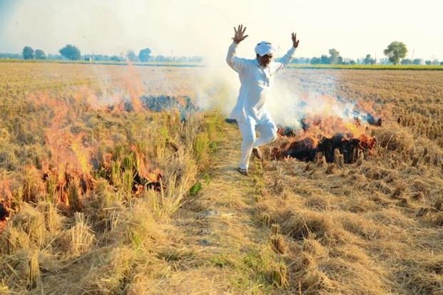 Despite ban, and awareness campaigns, crop burning resumes in Punjab, Haryana and UP